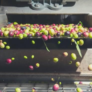 O reaproveitar dos resíduos dos lagares de azeite